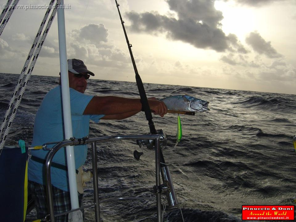 Pesca Alla Traina Seychelles 087 Pesca Alla Traina Jpg
