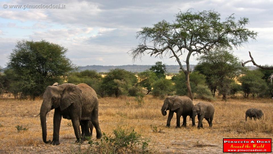 Tarangire Tanzania  city photos gallery : TANZANIA 6/TANZANIA Tarangire National Park 29